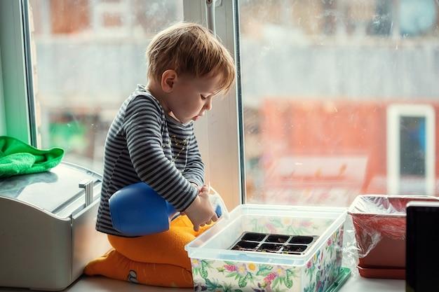 Kleiner kaukasischer junge 2 jahre alt, der sämlinge von einer sprühflasche wässert, während er auf einer fensterbank sitzt und sämlinge für das pflanzen in einem gewächshaus vorbereitet