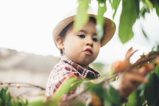 Kleiner kaukasischer junge, der kirschen an einem sonnigen tag beim klettern auf baum mit grünen blättern isst