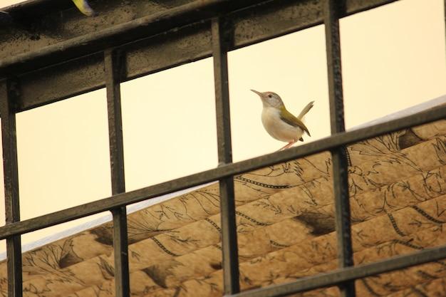 Kleiner kleiner vogel