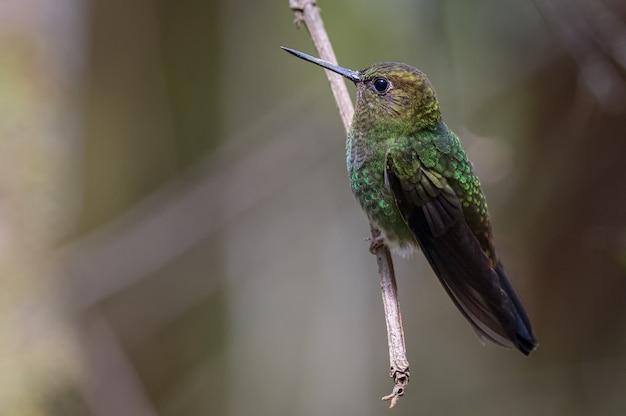 Kleiner kolibri thront auf einem ast