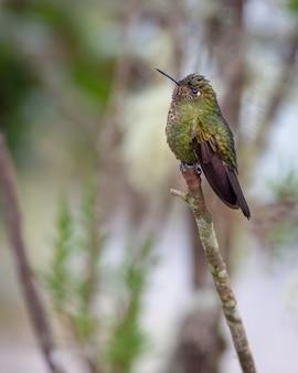 Kleiner kolibri thront auf einem senkrechten ast