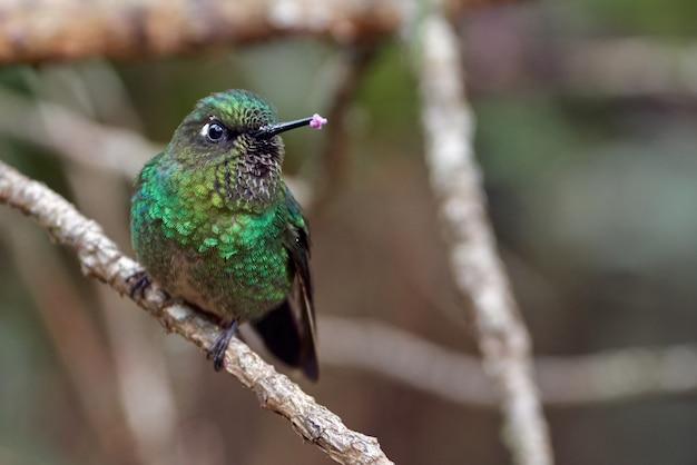 Kleiner kolibri thront auf einem winzigen ast im wald