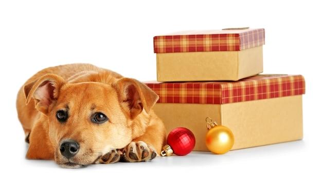 Kleiner lustiger süßer hund auf dem tisch mit geschenken und weihnachtsspielzeug, isoliert auf weiß