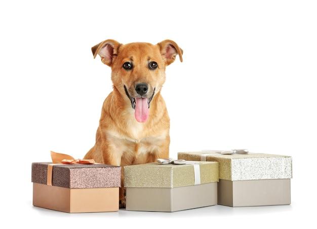 Kleiner lustiger süßer hund mit geschenkboxen, isoliert auf weiß