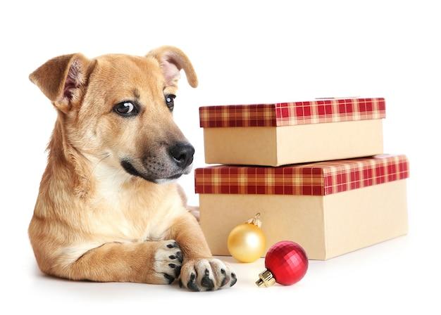 Kleiner lustiger süßer hund mit geschenken und weihnachtsspielzeug, isoliert auf weiß