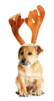 Kleiner lustiger süßer hund mit hirschhörnern, isoliert auf weiß
