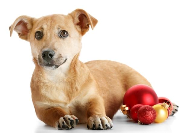 Kleiner lustiger süßer hund mit weihnachtsspielzeug, isoliert auf weißer oberfläche