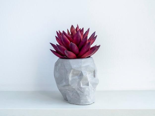 Kleiner moderner diy zementpflanzer, trendige dekoration in schädelform. konkreter blumentopf mit roter sukkulente auf weißem holzregal isoliert auf weißer wand.