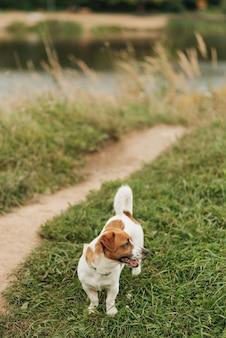 Kleiner niedlicher hund geht im park in der natur spazieren