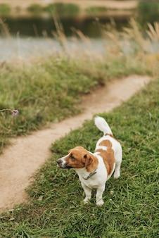 Kleiner niedlicher hund geht in den park in der natur. haustiere