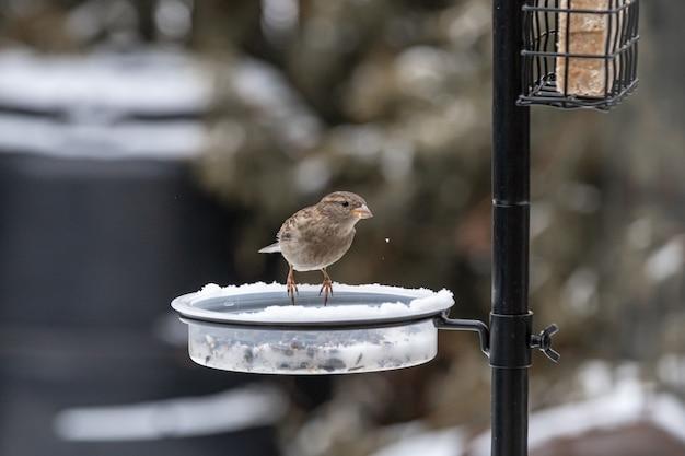 Kleiner niedlicher vogel, der auf dem futterautomaten sitzt und im winter isst