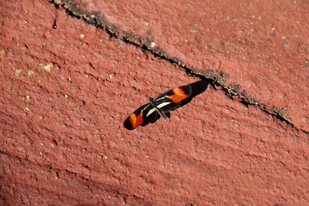 Kleiner orange und schwarzer schmetterling mit weißen details