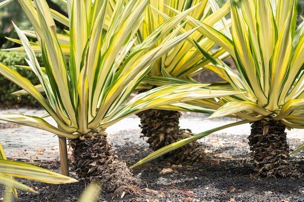 Kleiner palmengarten.