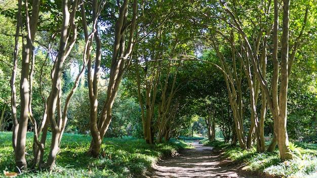 Kleiner pfad unter tunnel von kleinen bäumen im arboretum von suchum, abchasien.
