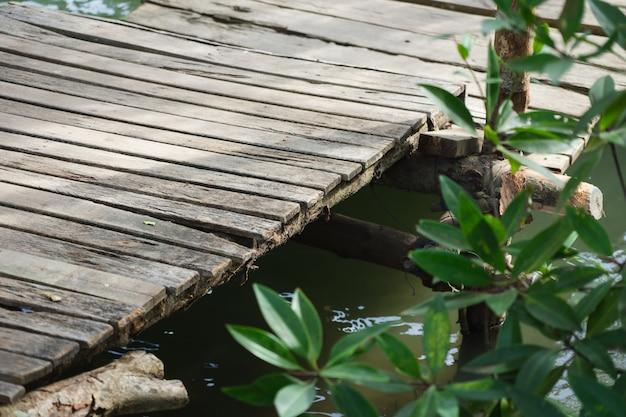 Kleiner pier gehen sie in den mangrovenwald, schauen sie ihn an und geben sie ihm ruhe und entspannung