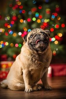 Kleiner roter pekingese-hund mit weihnachtslichtern am gemütlichen haus. neujahr santa hund.