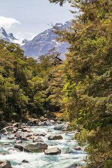 Kleiner schneller fluss im grünen neuseeland