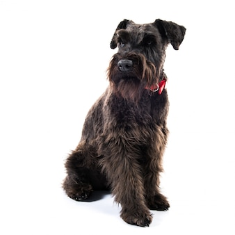 Kleiner schwarzer hund