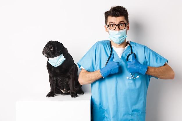Kleiner schwarzer mopshund in medizinischer maske, der nach links auf den kopierraum schaut, während der tierarzt mit dem daumen nach oben in lob und anerkennung, weißer hintergrund, zeigt