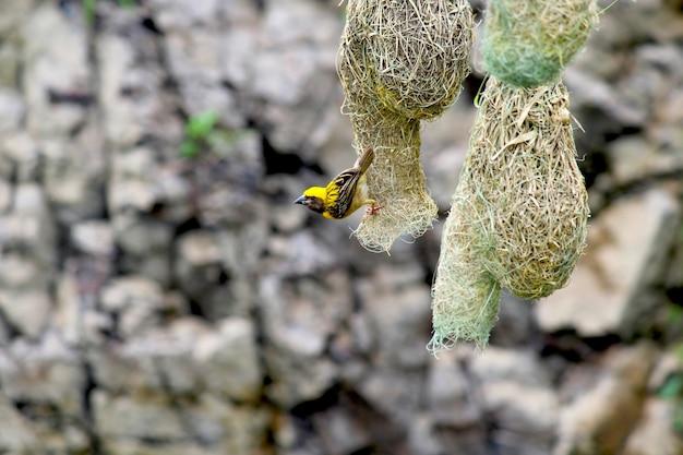 Kleiner spatz verlässt ihr nest auf der suche nach nahrung Premium Fotos
