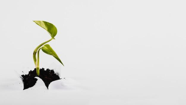 Kleiner sprössling, der durch papier wächst