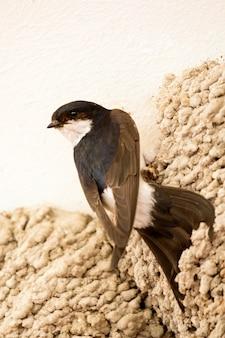 Kleiner städtischer vogel, der sein nest aufbaut