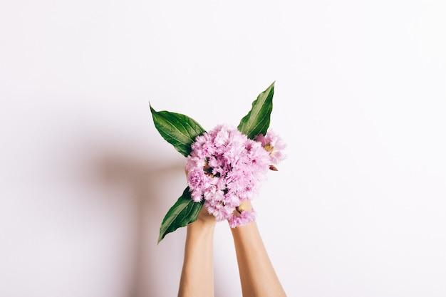 Kleiner strauß rosa nelken in den weiblichen händen auf weiß
