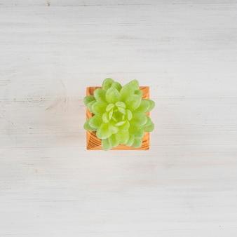 Kleiner succulent im topf