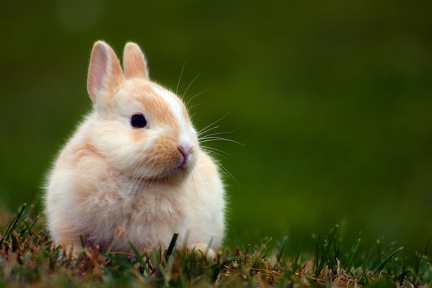 Kleiner süßer hase sitzt im gras