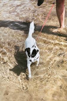 Kleiner terrierhund, der im meer spielt