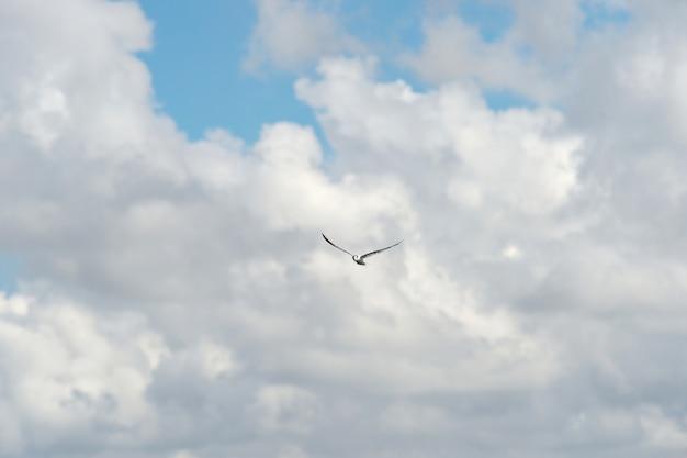 Kleiner vogel am himmel