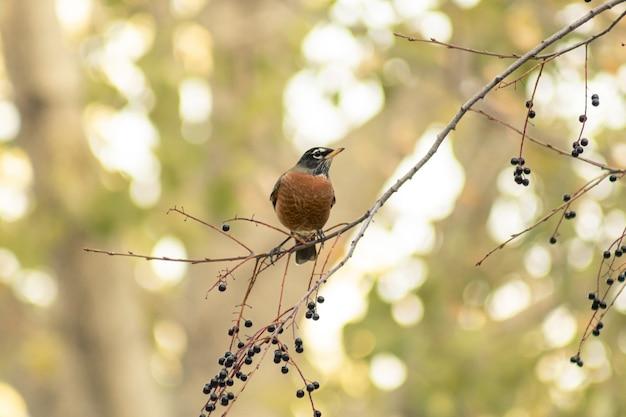 Kleiner vogel auf einem baumast mit einem unscharfen hintergrund