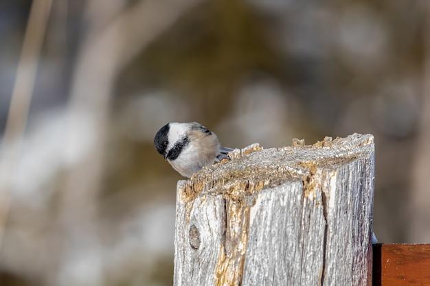 Kleiner vogel auf holzpfahl