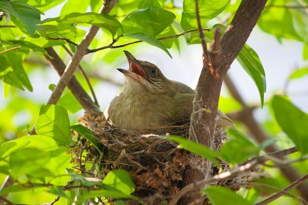 Kleiner vogel, der eier in einem nest ausbrütet