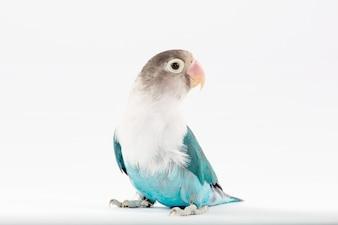 Kleiner vogel mit einem schönen gefieder