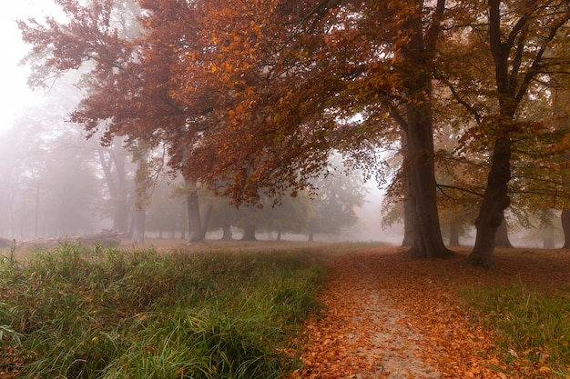 Kleiner weg im nebel. herbstfarben an einem nebligen morgen, schöne bäume im wald in dänemark