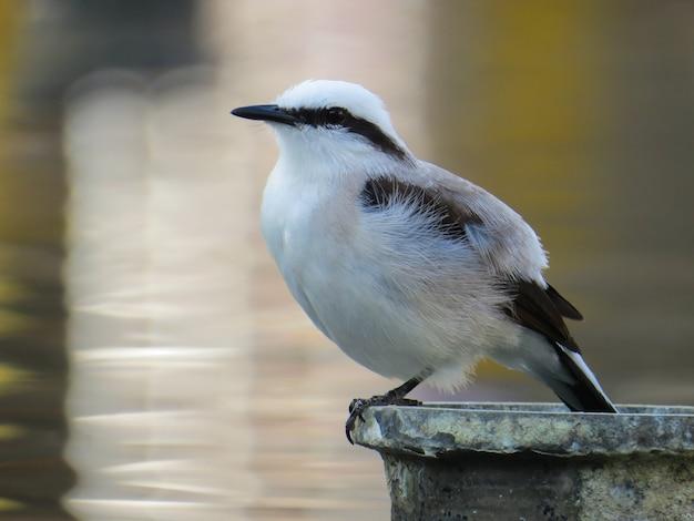 Kleiner weißer und schwarzer vogel