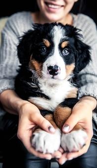 Kleiner welpe des berner sennenhundes auf händen des modischen mädchens mit einem netten manicurenimals, mode