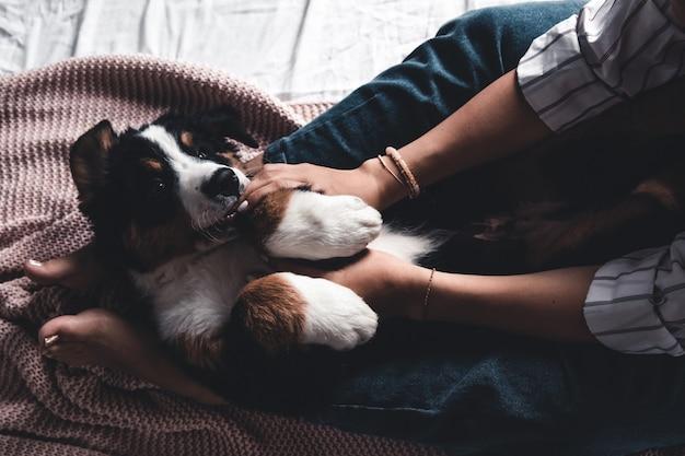 Kleiner welpe des berner sennenhundes auf händen des modischen mädchens mit einer netten maniküre. tiere, mode