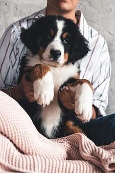 Kleiner welpe des berner sennenhundes auf händen des modischen mädchens mit einer schönen maniküre.