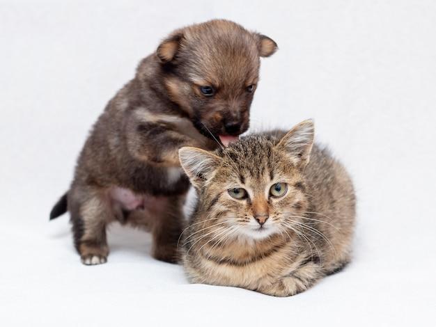 Kleiner welpe und kätzchen spielen. katze und welpe auf hellem hintergrund