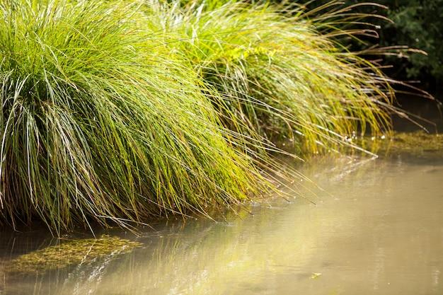 Kleiner wilder bach mit seiner freien und grünen vegetation