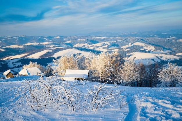 Kleiner zerbrechlicher baum, der einsam mit raureif bedeckt ist, wächst aus einer schneewehe vor dem hintergrund der winterberge. konzept eines sterbenden waldes und einer schlechten ökologie