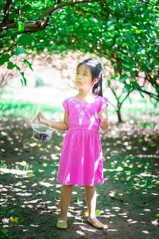 Kleines asiatisches mädchen, welches die maulbeerfrucht im garten schaut