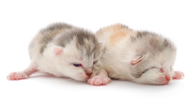 Kleines baby kätzchen neugeborenes
