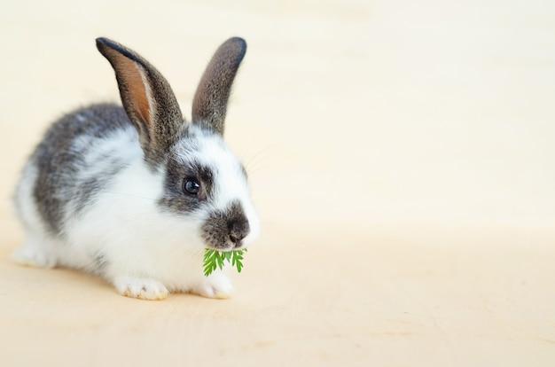 Kleines babykaninchen, das salat isst