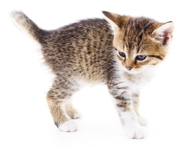 Kleines braunes kätzchen lokalisiert auf weiß