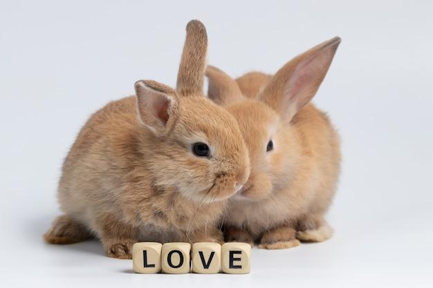 Kleines braunes kaninchen, das mit holzkistebeschaffenheit auf lokalisiertem weißem hintergrund am studio sitzt.