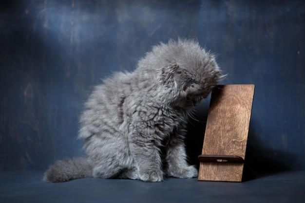 Kleines britisches kätzchen knabbert an einem hölzernen telefonständer