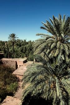 Kleines dorf im palmenhain in marokko